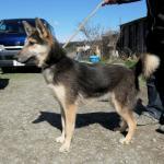 オオカミ犬3