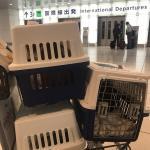 香港へネコちゃん3頭を輸出しましたイメージ
