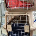 台湾へネコちゃん2頭を輸出しましたイメージ