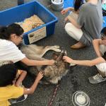 移動動物園で名古屋まで行ってきました! イメージ2