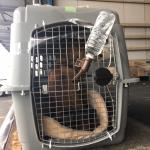 アメリカにワンちゃんを1頭輸出しましたイメージ