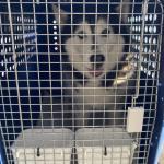 ドイツより犬1頭を輸入しましたイメージ