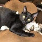 各色 普通の猫イメージ2