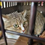 シンガポールへ猫1頭を輸出しましたイメージ