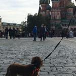 ロシアへワンちゃん1頭を輸出しましたイメージ