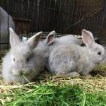 ウサギ各種イメージ4