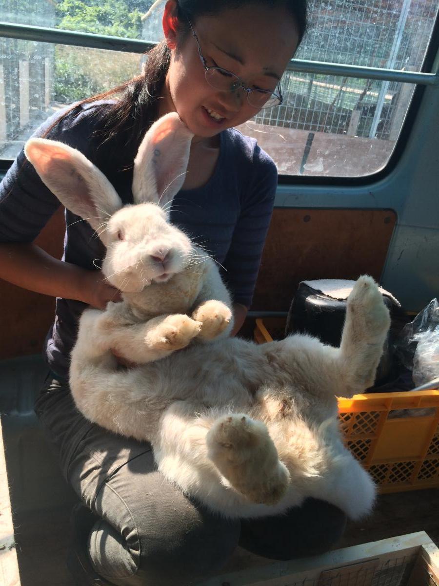 ウサギ各種イメージ1