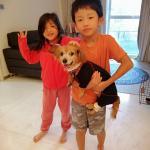 香港へワンちゃん1頭を輸出しましたイメージ