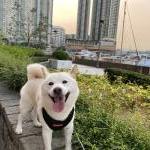 香港へワンちゃん1頭の輸出をお手伝いしました