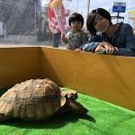長野南ハウジングパーク様で移動動物園を開催しました! イメージ19