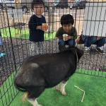 長野南ハウジングパーク様で移動動物園を開催しました! イメージ18
