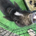 長野南ハウジングパーク様で移動動物園を開催しました! イメージ17