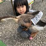 長野南ハウジングパーク様で移動動物園を開催しました! イメージ13