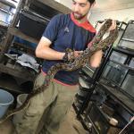 アミメニシキヘビ(ドワーフ)3
