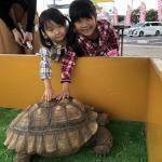 長野南ハウジングパーク様で移動動物園を開催しました! イメージ5