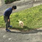 ニュージーランドにワンちゃんの輸出をしました!イメージ