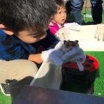 品川シーサイド住宅展示場様にて移動動物園を開催しました! イメージ2