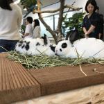 今月も専門学校 ビジョナリーアーツ渋谷校様にて移動動物園を開催しました! イメージ4