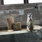 今月も専門学校 ビジョナリーアーツ渋谷校様にて移動動物園を開催しました! イメージ3