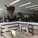 今月も専門学校 ビジョナリーアーツ渋谷校様にて移動動物園を開催しました! イメージ2