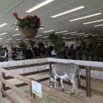 今月も専門学校 ビジョナリーアーツ渋谷校様にて移動動物園を開催しました! イメージ5