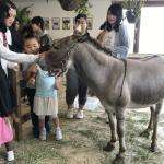 今月も専門学校 ビジョナリーアーツ渋谷校様にて移動動物園を開催しました! イメージ8