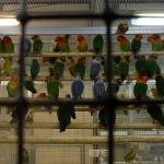 各種オウム・インコ・その他鳥類イメージ4