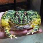 カエルやサラマンダーなどイメージ4