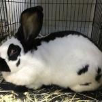 ウサギ各種イメージ5