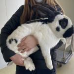 ヨーロッパより大型ウサギ6種50羽が到着...
