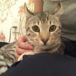 日本初となる6本指のネコ、キーツォが到着ですイメージ