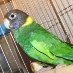 各種オウム・インコ・その他鳥類イメージ3