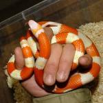 ヘビ各種イメージ4