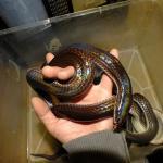 ヘビ各種イメージ3