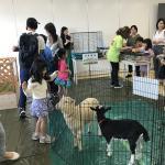 GW専門学校 ビジョナリーアーツ渋谷校にて移動動物園を開催しました! イメージ3