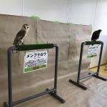 GW専門学校 ビジョナリーアーツ渋谷校にて移動動物園を開催しました! イメージ1