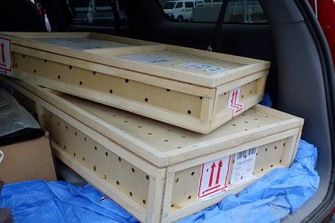 EUCBのヘルマンリクガメが大量入荷です4