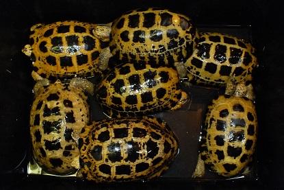 インドネシアより爬虫類、両生類の到着です1