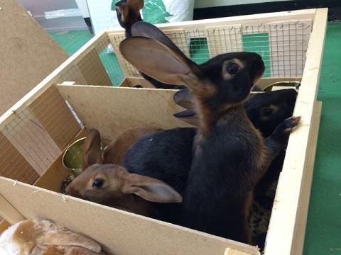 EU便にてご注文分を含めた大型ウサギ各種到着しました1
