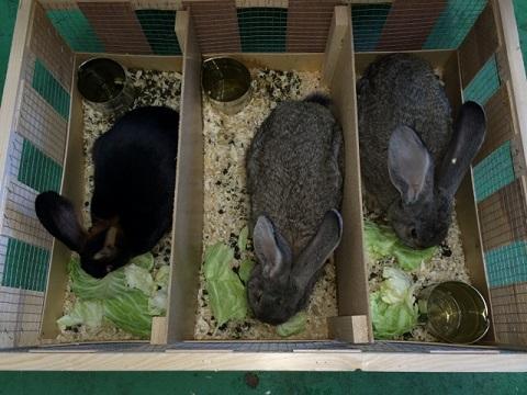 EU便にてご注文分を含めた大型ウサギ各種到着しました3