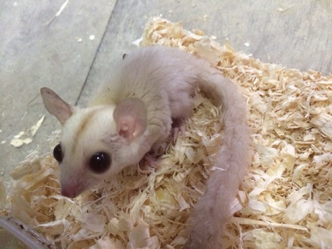 タイより人気の小動物が到着です1