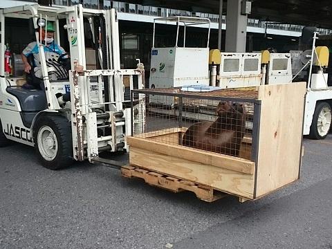 Export of Otaria to Bahrain.3