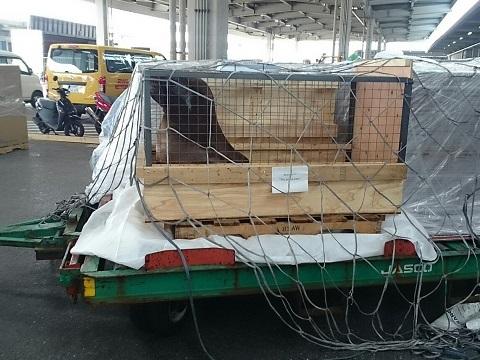 Export of Otaria to Bahrain.4