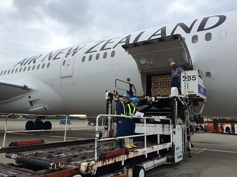 ニュージーランドよりご注文分を含むアルパカが到着しました1