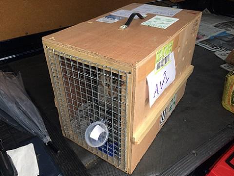 イギリスからの猫の輸入3