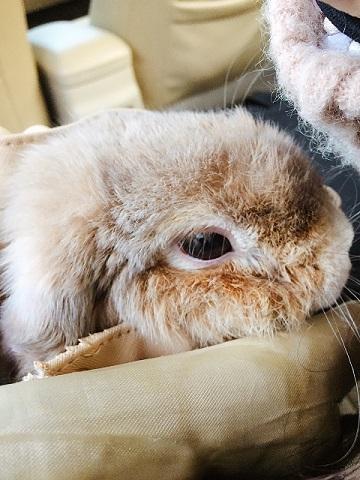 香港向けウサギさんの輸出3