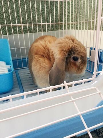香港向けウサギさんの輸出4