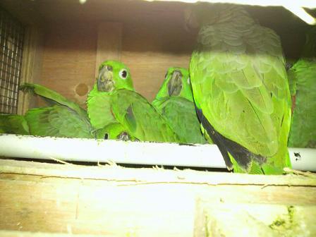 南米から、哺乳類と鳥類が到着です。3