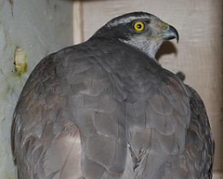 ウズベキスタンから鳥類が到着です。2
