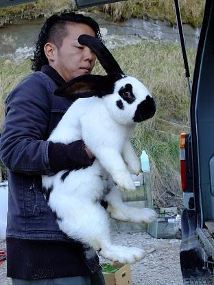 ヨーロッパからフレミッシュジャイアントなど、ウサギの到着です2